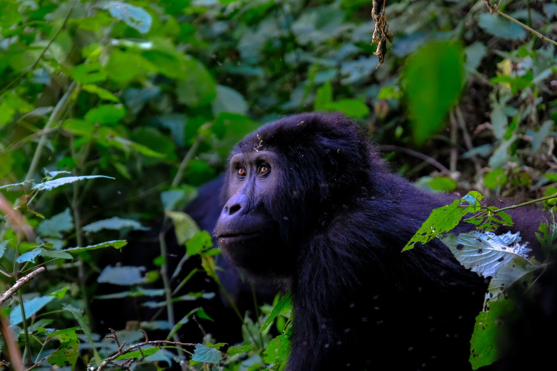 photo of primate