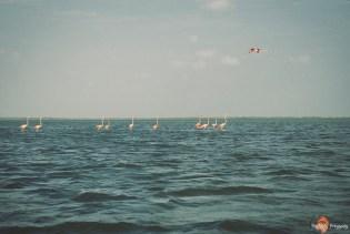flamingi kolumbia