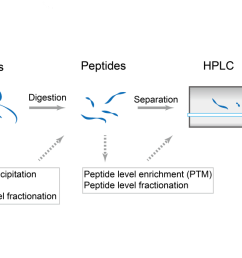 protein digestion diagram [ 1379 x 603 Pixel ]