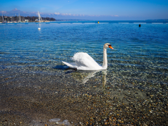 Suisse Genève lac léman