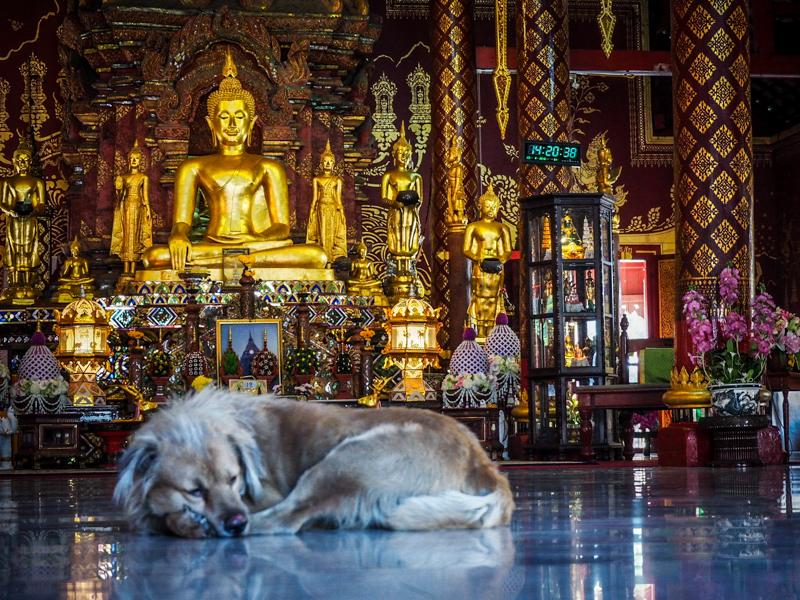 chiang mai temple thailande