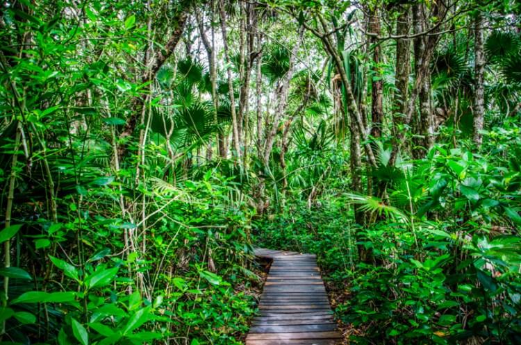 muyil jungle yucatan