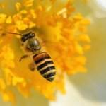 蜂王乳是什麼?蜂王乳功效多!可以養顏美容、還能對抗更年期!