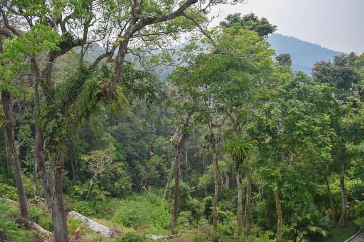 Penang-hill22