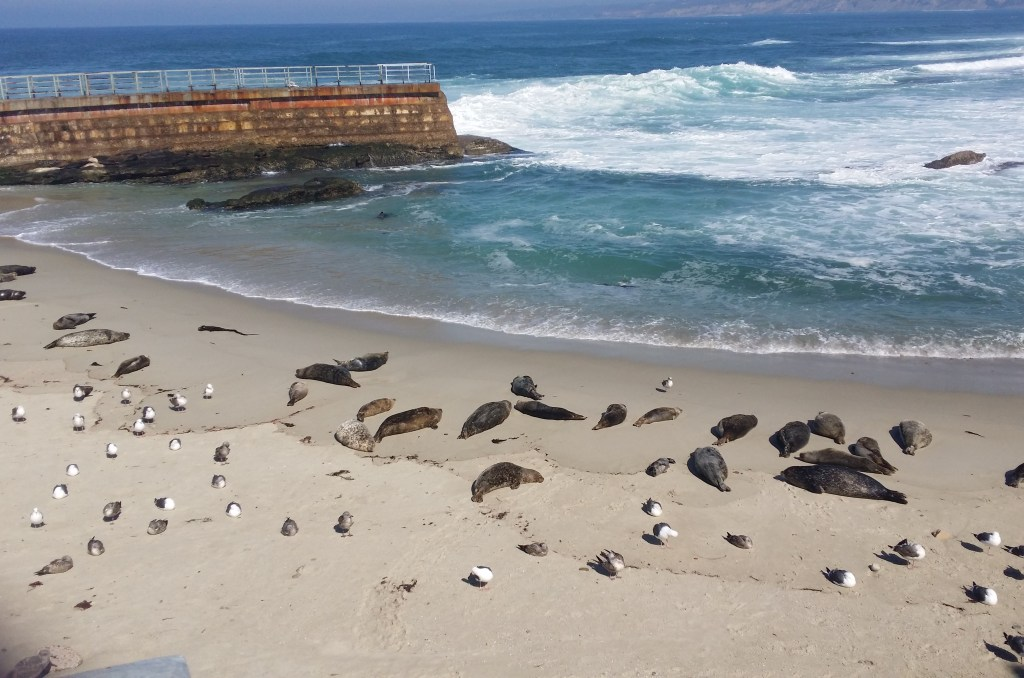 Seal Pups, Anxiety Dogs For Cheetahs, Border Patrol Agents, and Sunsets in San Diego