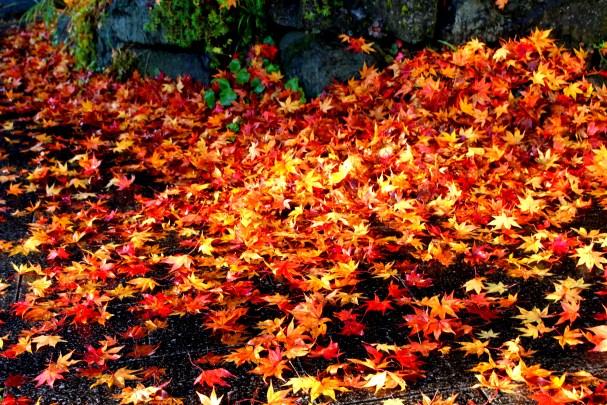 B Leaves.JPG
