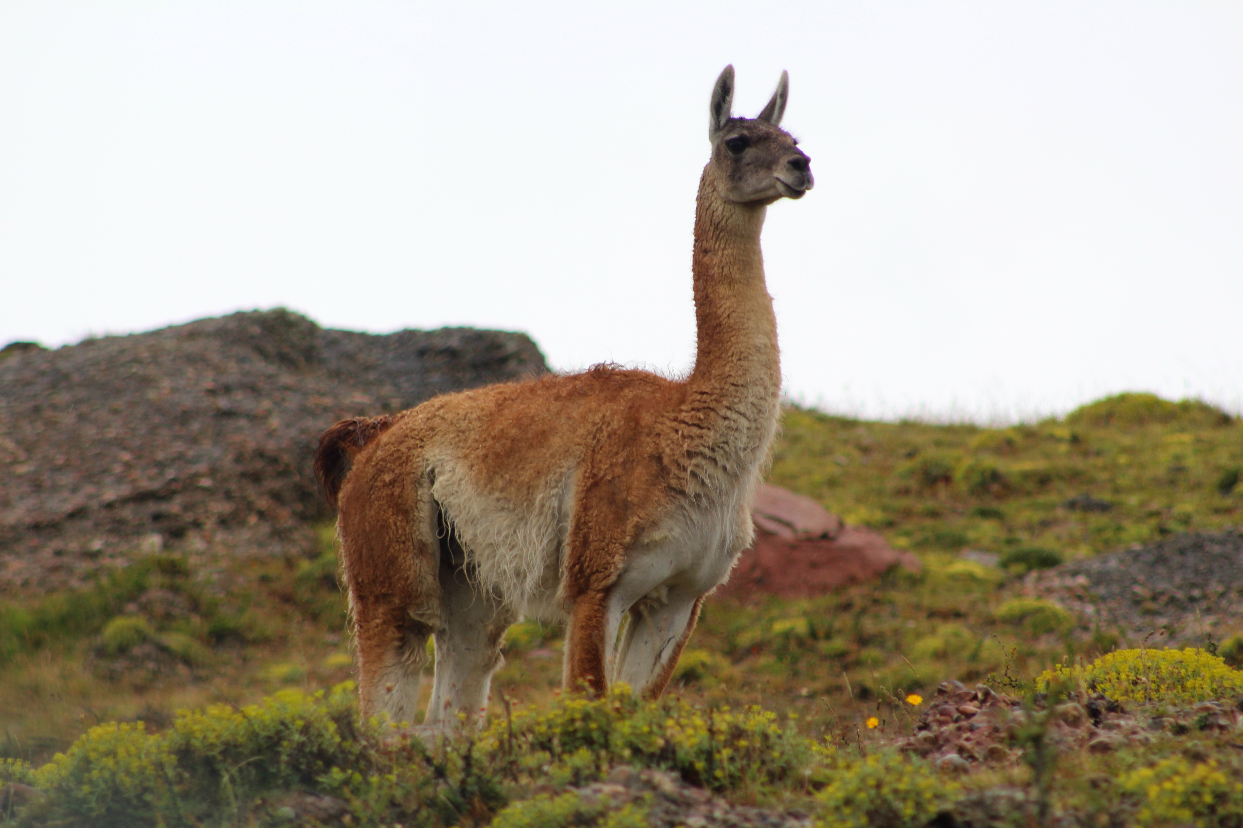 Patagonia 99999