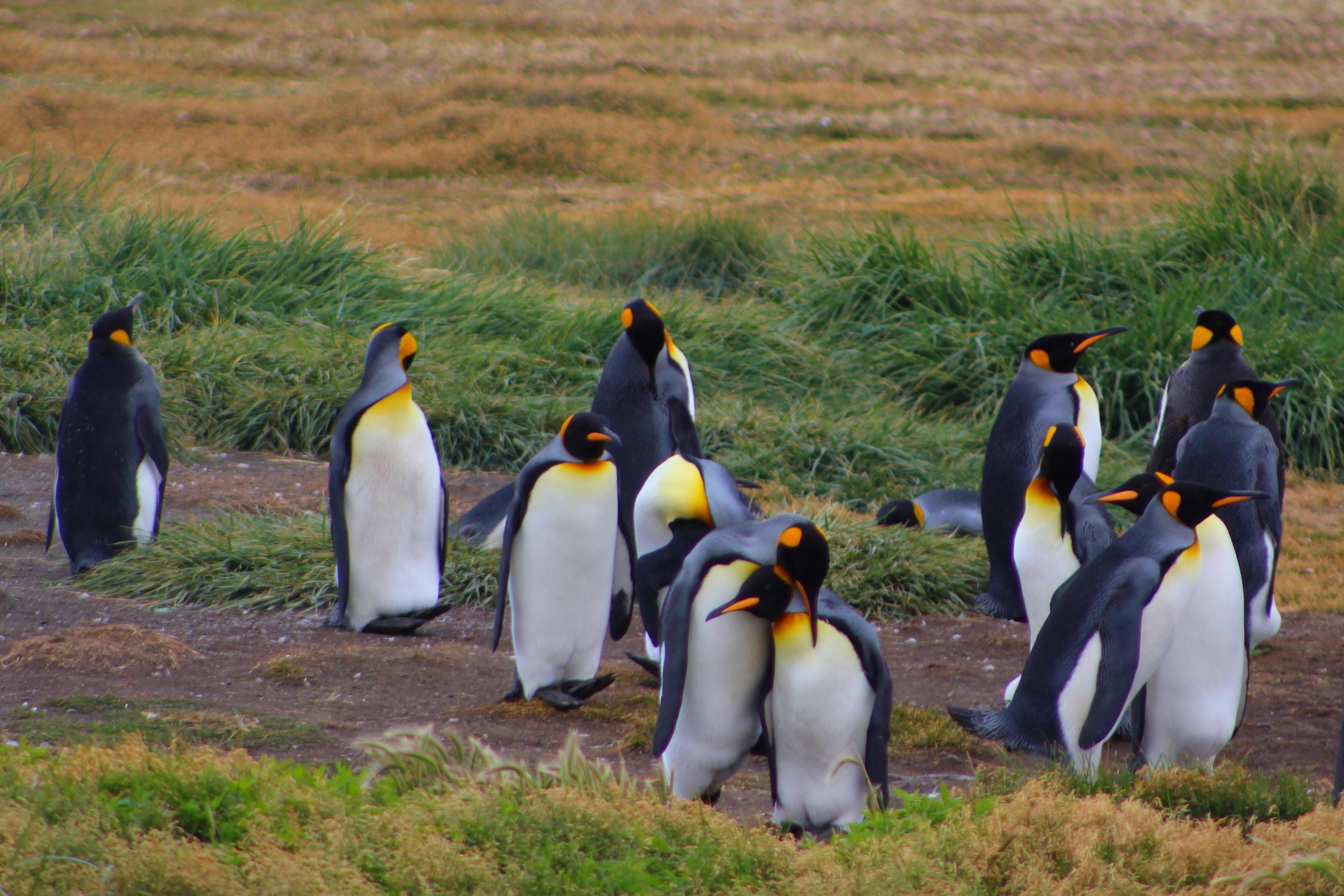 Penguins 4.JPG