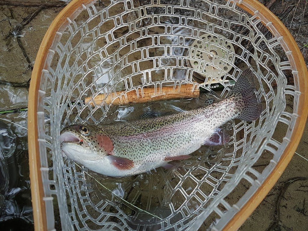 Flies for the swift trout and fly for Swift river fly fishing