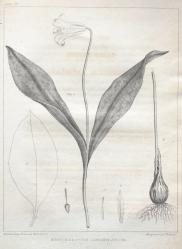 Barton 1821