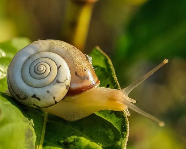 Come rendere più veloce il tuo sito in WordPress senza essere uno specialista (Guide, Guide per la configurazione di WordPress)