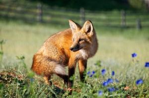Meglio aggiornare subito Firefox all'ultima versione!