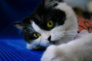 """<span class=""""entry-title-primary"""">Analizzare Wi-Fi altrui con il proprio gatto</span> <span class=""""entry-subtitle"""">Un ricercatore informatico ha spiegato, già nel 2014, un curioso procedimento per trarre informazioni sui router dei suoi vicini</span>"""