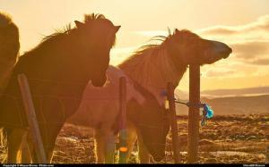 Domini .horse: come e dove registrarne uno