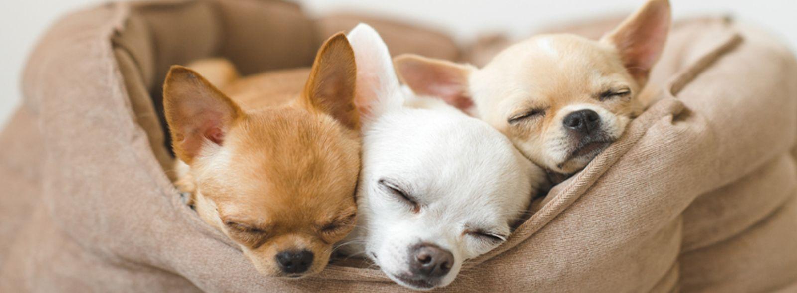 Cucce Per Cani Da Interno Trovami