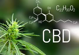 CBD and Anorexia: The Health Benefits