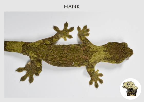 (2) Hank