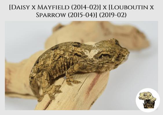 (3) [Daisy x Mayfield (14-02)] x [Louboutin x Sparrow (15-04)] (2019-02)