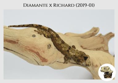 (4) Diamante x Richard (2019-01)