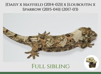 (6) [Daisy x Mayfield (14-02)] x [Louboutin x Sparrow (15-04)] (2017-03)