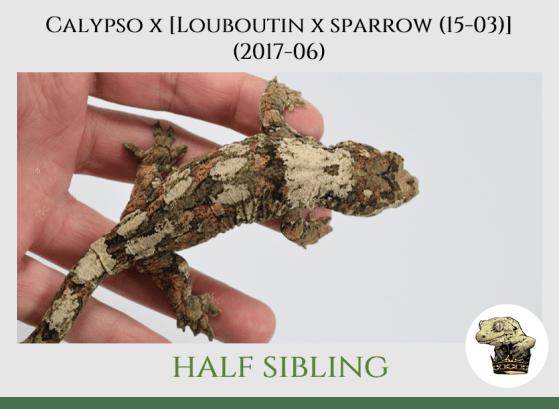 (7) Calypso x [[Louboutin x Sparrow (15-03)] (2017-06)