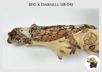 (l8) BFG x Darnell (18-04)