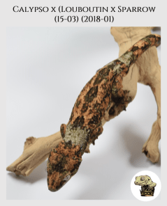 (p1) Calypso x [Louboutin x Sparrow (15-03)] (2018-01)