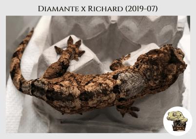 Diamante (19-07) WM (2020-04-12) (5)