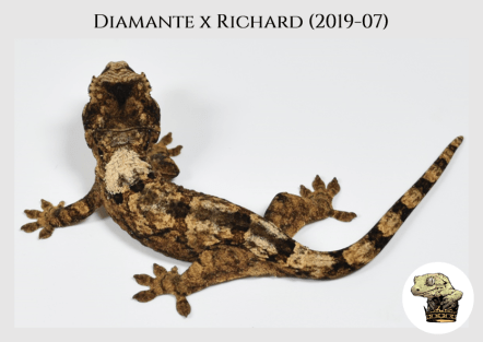 Diamante x Richard (2019-07) (2019-11-24) WM (1)