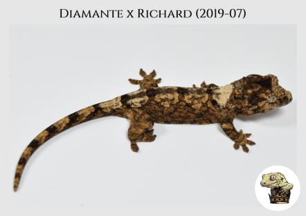 Diamante x Richard (2019-07) (2019-11-24) WM (3)