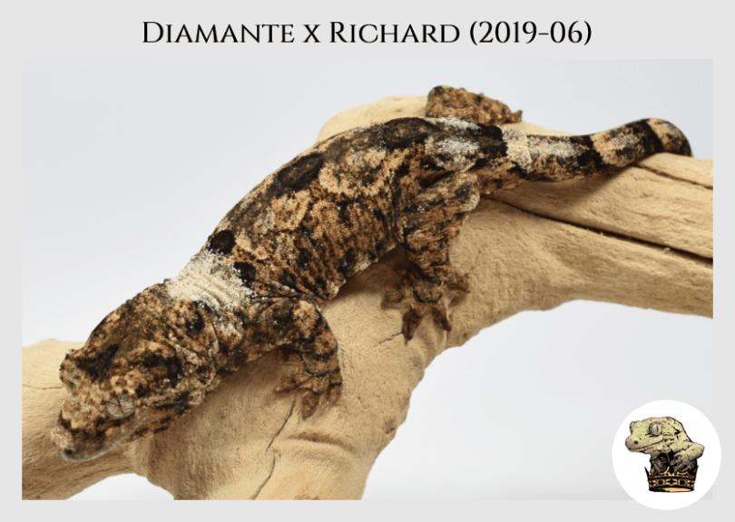 Diamante x Richard (2109-06) (2020-02-15) WM (2)