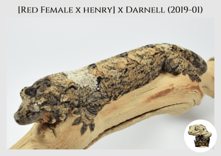 [Red Female x Henry] x Darnell (2019-01) (2020-02-15) WM (3)