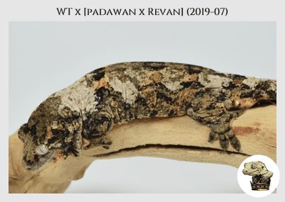 WT (19-07) WM (2020-05-11) (3)