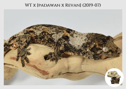 WT (19-07) WM (2020-05-11) (4)