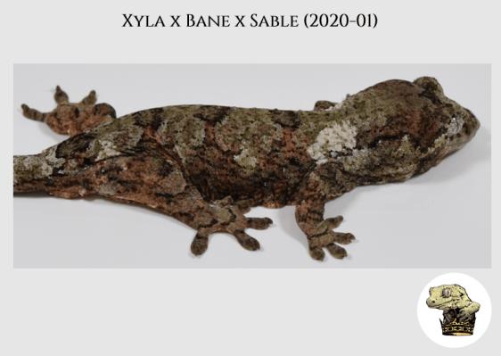 2 - Xyla (2020-01) WM