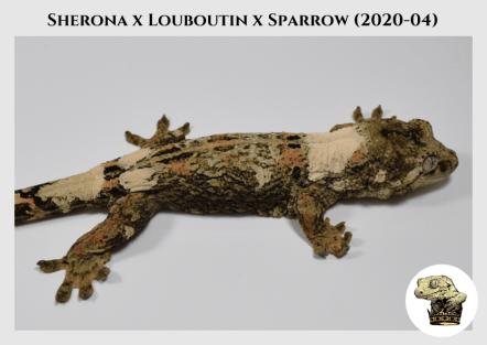 3 - Sherona (2020-04) WM