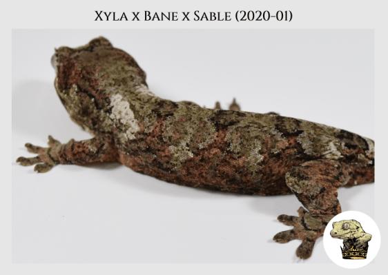 3 - Xyla (2020-01) WM