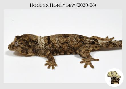 Hocus (2020-06) WM (3)