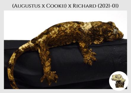 Augustus x Cookii (2021-01) (2021-05-29) WM (3)