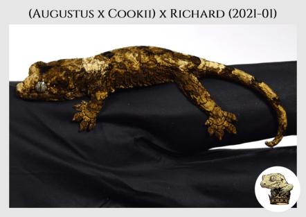Augustus x Cookii (2021-01) (2021-05-29) WM (4)