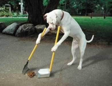 Cleanup Pup