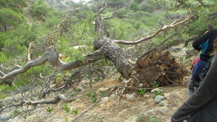 Ηράκλειο: Νεκρός βρέθηκε ο πεζοπόρος στο Φαράγγι Κουδουμά