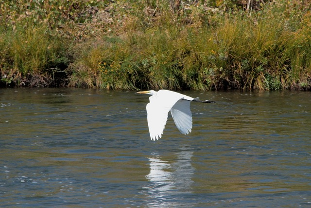 The Truckee River supports fish and wildlife as it makes its way through the mountains and desert to Pyramid Lake.