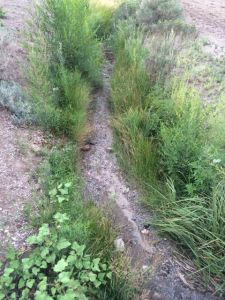 Highland ditch dry beginning of August 2014