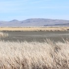 Wetlands that normally have thousands of acres of shallow ponds and marsh lands are nearly completely dry.