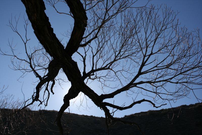 Red willow (Salix laevigata) and sunshine, Mayberry Park, Reno. Feb 20, 2015.