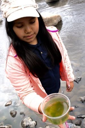 A student from Alice Smith Elementary School holds a cup full of macroinvertebrate surprises. May 21, 2015.