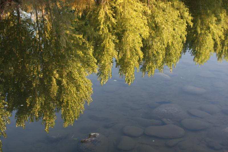 Truckee River near Oxbow Park, Oct 9 2015
