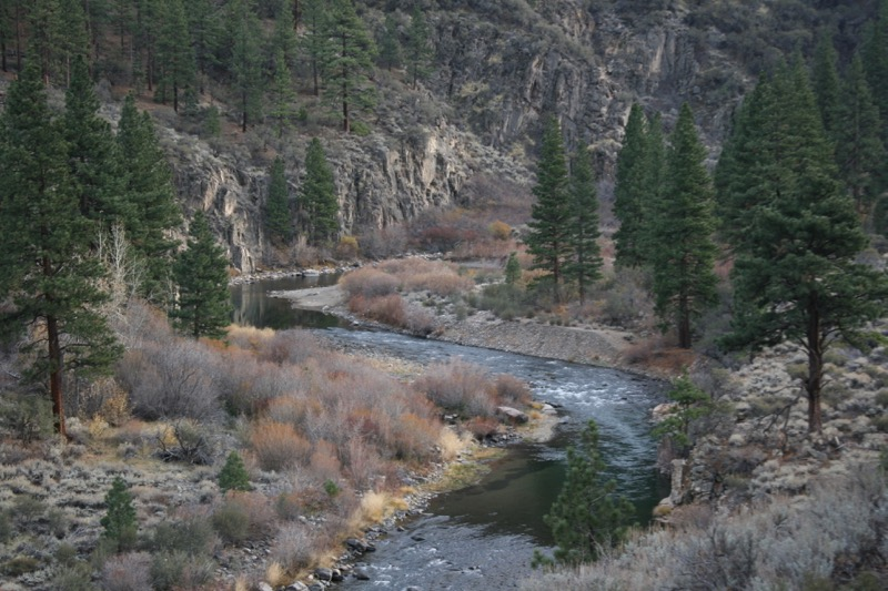Truckee River near Puny Dip, Nov 22, 2015.