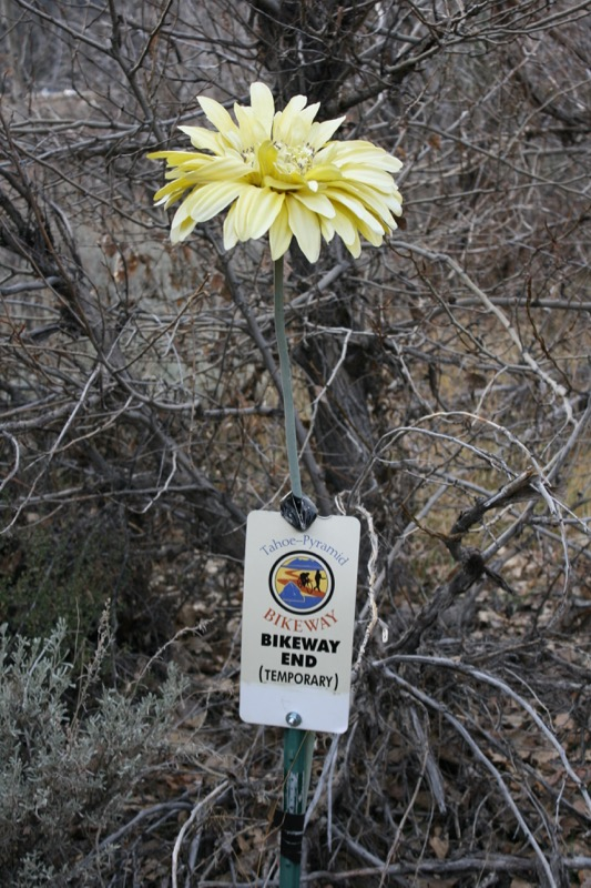 An unusual flower marks the end of the trail. Nov 22, 2015.